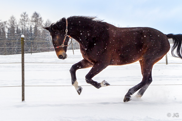 Diva im Schnee